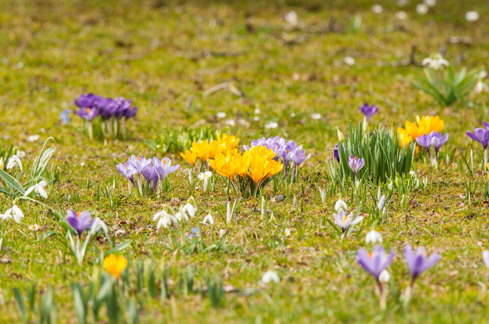 Frühlingserwachen im Chiemgau